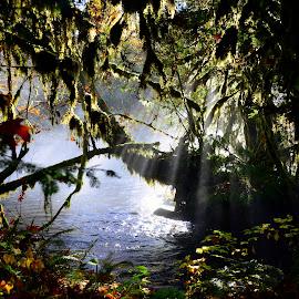 Oregon by Rebecca Belcher - Landscapes Travel ( water, oregon, autumn, fog, fall, photographer, landscape, professional, photography, sunbeam, mist, river )