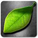 Fresh Leaves – visually stunning Live Wallpaper!