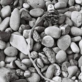 Stranded by Christiaan Partridge - Nature Up Close Rock & Stone ( rock formations, seaweed, pebbles, beach, rocks )