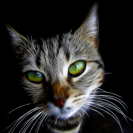Smiljka by Srbx  Cicapo - Digital Art Animals ( redfield fractalius )