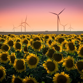 SUNset & SUNflower by Lupu Radu - Landscapes Prairies, Meadows & Fields ( windpower, sunset, sunflower,  )