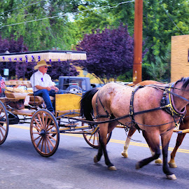 Horse and Buggy by Jo Gonzalez - Transportation Other ( buggy, street, horse )