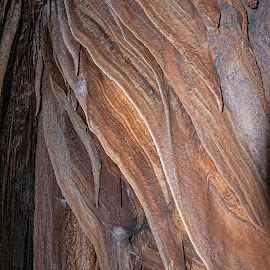 King solomons' Cave by Vibeke Friis - Landscapes Caves & Formations ( tasmania, king solomon, caves )