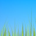 Grass live wallpaper icon