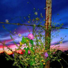 Southern Charm by Jeannie Love - Instagram & Mobile Other ( fence, bouquet, sky, wire, sunrise, morning, country, flower )