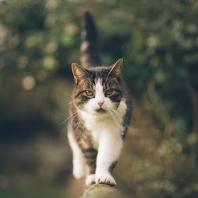 Picoto-cat (2 of 2).jpg