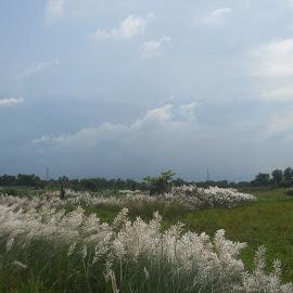 by Kanchan Chatterjee - Landscapes Prairies, Meadows & Fields