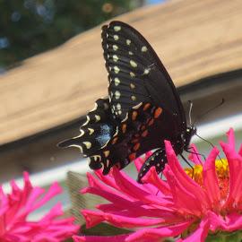 by Jennifer Peltz - Nature Up Close Gardens & Produce