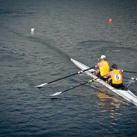 Head of the Charles Regatta by Alan Scherer - Sports & Fitness Watersports ( charles river, rowing, crew, alan scherer photographer, regatta )