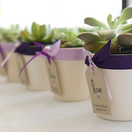 Succulents by Wade Tregaskis - Wedding Details ( succulent, gift, potted, wedding, succulents, pot )