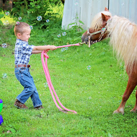 Pony Training 101 by Amanda Shingleton - Animals Horses ( child, playing, pony, bubbles )