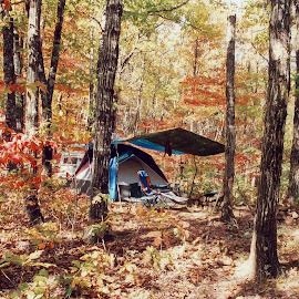Camping In The Ozarks by Brenda Hooper - Landscapes Forests ( ozark mountains, colorful, autumn, camping, tent, arkansas )
