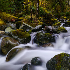 Boulders and Moss by Christopher Fridley - Landscapes Forests ( forests, washington, wilderness, nature, trees, long exposures, waterscapes, landscapes, pacific northwest, christopher fridley )