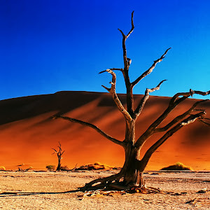 deadvlei_tree_2.jpg