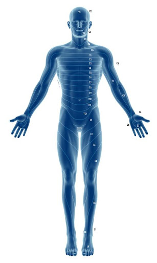 玩免費醫療APP|下載Dermatome Nerve Distribution app不用錢|硬是要APP