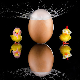 Happy Easter !!! by Duy Tang - Abstract Water Drops & Splashes ( chicken, reflection, easter, drop, crown, glass, paint, egg, black )