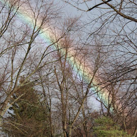 Rainbow through the Trees by Darlene Pavek - Landscapes Weather ( trees, rainbow )