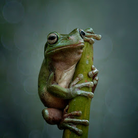 awaits a future by Alonk's Roby - Animals Amphibians