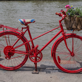 Red Wheels by Donna Brittain - Transportation Bicycles ( red, basket, flowers, mississauga, bicycle )