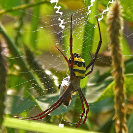 by Smarajit Saha - Animals Insects & Spiders