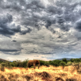 Magnificent Elephant  by Niki Ashcroft - Animals Other ( clouds, mountains, elephant, wildlife, bush, big animal )