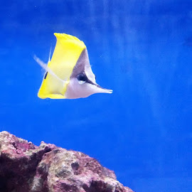 by Lyndsay Hepburn - Animals Fish