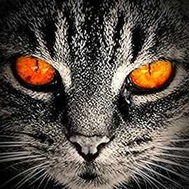 Ruby by Elyzabeth Krajewski - Animals - Cats Portraits ( cats animals cat portraits,  )