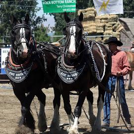 These horses were pretty! by Lornna Best Nunez - Animals Horses