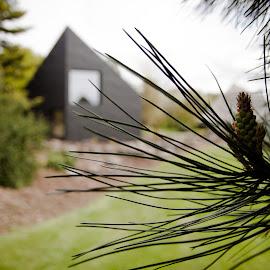 MacroMicro Studio by Ruaridh Nicol - Buildings & Architecture Other Exteriors ( studio, zinc, tree, green, depth of field, gardens, blur, dof, botanical garden, architecture, black )