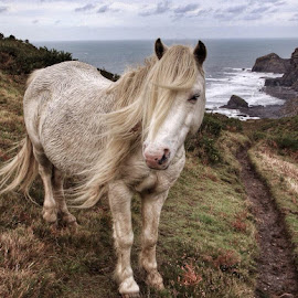 Wild cliff Pony by Tom McAsey - Animals Horses