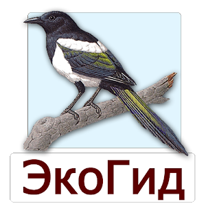 EcoGuide: Russian Birds