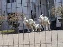 Three White Elephants