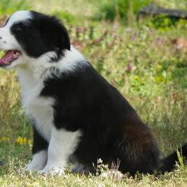 po by Floranda Rene - Animals - Dogs Puppies ( 3, 2, 1, 5, 4 )