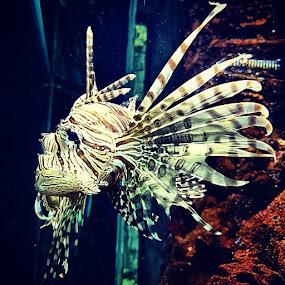 Underwater Lion by Mirna Abaffy - Instagram & Mobile Instagram