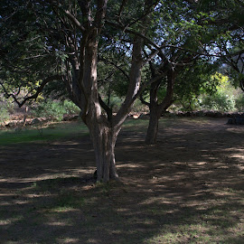 Shadow patterns by Kartik Sharma - Nature Up Close Gardens & Produce