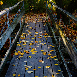 by Mark Silvani - City,  Street & Park  City Parks ( autumn, fall, bridge, leaves, wooden bridge )