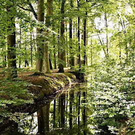 Schaffelaar summer scene 1 by Anita Berghoef - Nature Up Close Trees & Bushes ( reflection, leafs, wood, tree, nature, green, summer, trees, forest, leaf )
