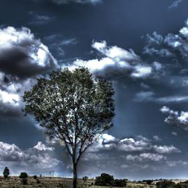 Dark tree  by Carl Kranhold - Landscapes Prairies, Meadows & Fields ( nature, tree, outdoors, plants, dark, fields,  )