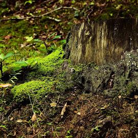 by Bridgette Dorsett - Nature Up Close Mushrooms & Fungi (  )