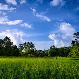 Paddy Field near Merdang Garden, Samarahan, Sarawak by KY Pang - Landscapes Prairies, Meadows & Fields