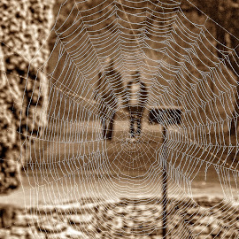through the web by Chrissy Woodhouse - Nature Up Close Webs ( park, moisture, path, web, spider, people, spiders web,  )