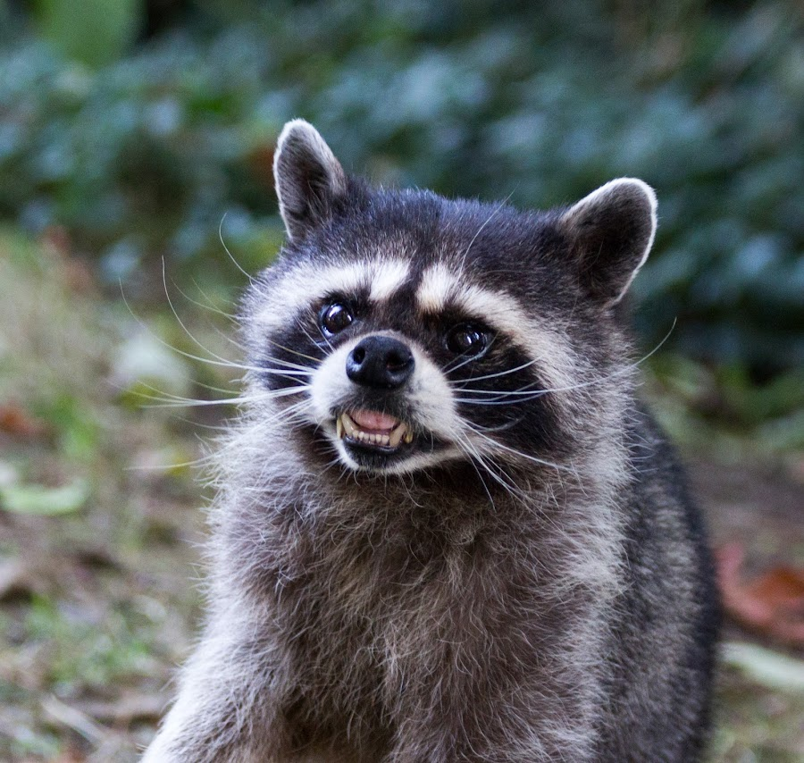 raccoon jewish personals The truth about jewish dating rules are there really any jewish dating rules sure there are basic rules of dating that most people try to follow but specifically jewish dating rules from a religious perspective there are in fact rules for courtship in jewish law the law books, otherwise known as halacha, don't exactly refer to dating as.