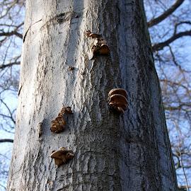 Toadstools on a tree 2 by Anita Berghoef - Nature Up Close Mushrooms & Fungi ( winter, tree, nature, bark, nature up close, funghi, nature close up, toadstools )