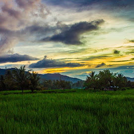 From Mountain by Vicky Mahendra - Landscapes Prairies, Meadows & Fields ( mountain, photographer, landscapes, photography, , Earth, Light, Landscapes, Views, renewal, green, trees, forests, nature, natural, scenic, relaxing, meditation, the mood factory, mood, emotions, jade, revive, inspirational, earthly )
