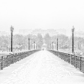 Snowy Bridge by Oleg Milyutin - City,  Street & Park  City Parks ( lantern, winter, bridgework, seasons, snow, lamp, bridge, snowing, black and white, b and w, landscape, b&w, monotone, mono-tone, garyfonglandscapes, holiday photo contest, photocontest )