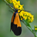 Black & Yellow Lichen Moth