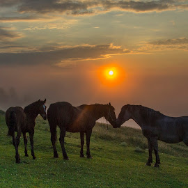 All you need is lov by Sveduneac Dorin Lucian - Animals Horses ( nature, horse, romantic, romania, sunrise,  )