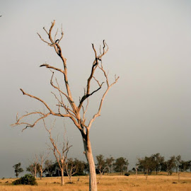 by Naomi Jensen - Landscapes Prairies, Meadows & Fields
