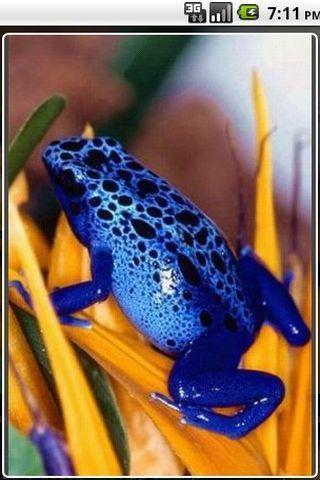 七彩虹青蛙