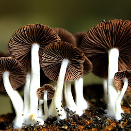 Bukan Jamur Kulit by Lucas Setyaputra - Nature Up Close Mushrooms & Fungi (  )